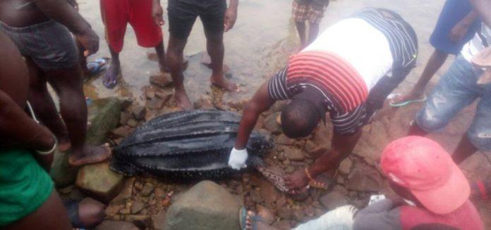 Meet Eric From Ghana: He Tags Sea Turtles By The Seashore